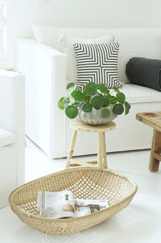 Money Plant Decoration In Living Room: 10 Plants That Will Bring A Pozitive Vibe To Your Home