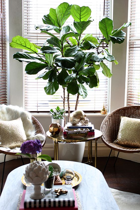 I Love This Gorgeous Oversized Plant That Can Make A Statement In Your Home Mix It Any Kind Of Decor And Add Next To Office