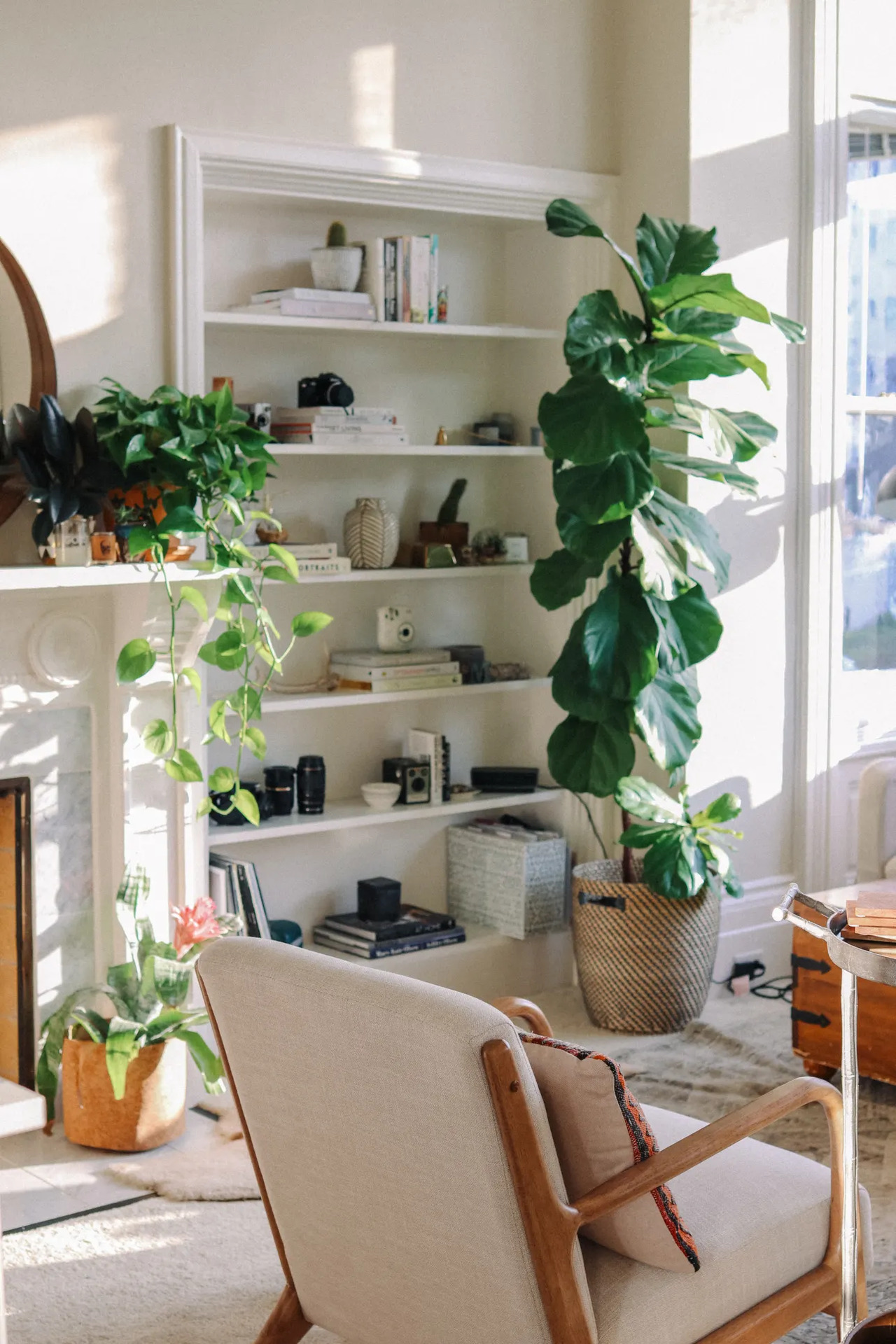 A dreamy San Francisco studio apartment filled with plants ...