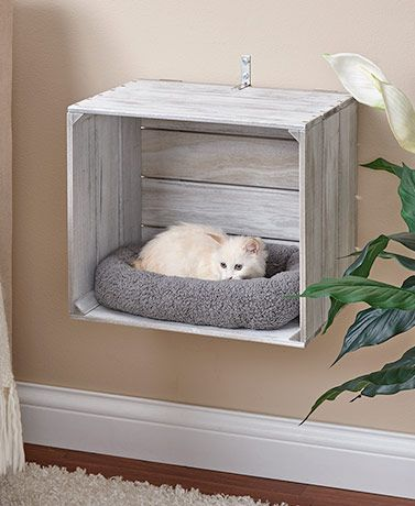 6 Cool Cat Beds That Double As Home Decor Daily Dream Decor